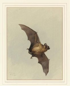 Archibald Thorburn - A Bat Horse-Shoe