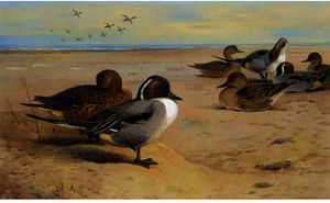 Archibald Thorburn - Arrabio Ducks