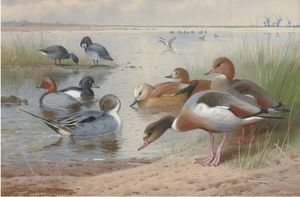 Archibald Thorburn - Wildfowl. Arrabio, Zarro, adornado, Ruddy Shelduck, Widgeon E Brent Geese
