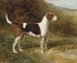 Heywood Hardy - Luz do sol , uma Foxhound do Quorn
