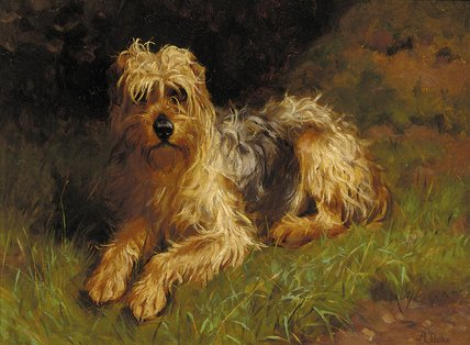 Terrier Wheaten revestido macio por Alfred Duke (1863-1905, United Kingdom)