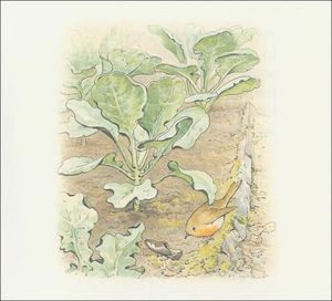 Beatrix Potter - Peter 13a coelho - (11x11)