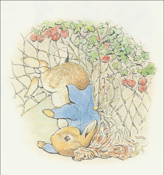 Peter coelho 15a - (11x11) por Beatrix Potter (1866-1943)