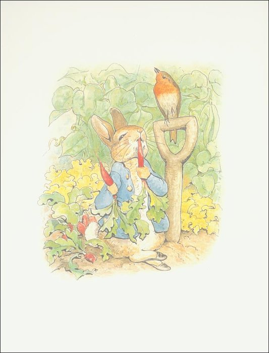 Peter coelho 1a - (11x13) por Beatrix Potter (1866-1943)
