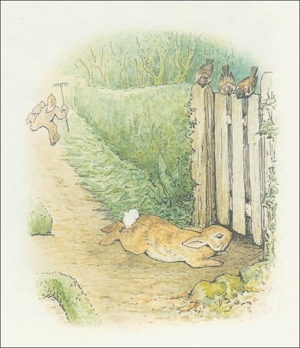 Peter 27a coelho - (11x12) por Beatrix Potter (1866-1943)