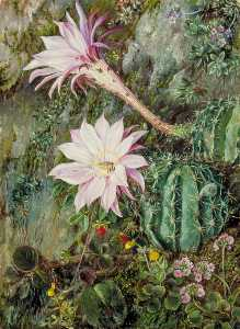 Marianne North - flores silvestres de mussooree , Na índia