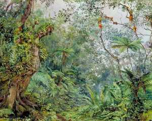 Marianne North - vista do fernwalk , Jamaica