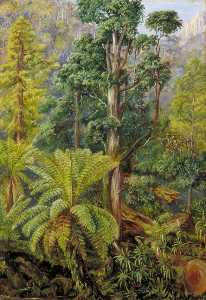 Marianne North - Visto do Floresta no monte Wellington , Tasmânia